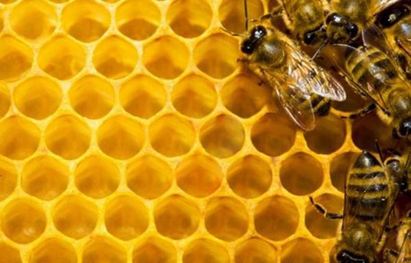 bijen-in-bijenkorf